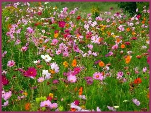 fleurs-de-champs.jpg